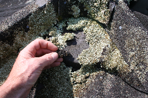 Lichen Removal How To Remove Lichen Without Waster Blasting